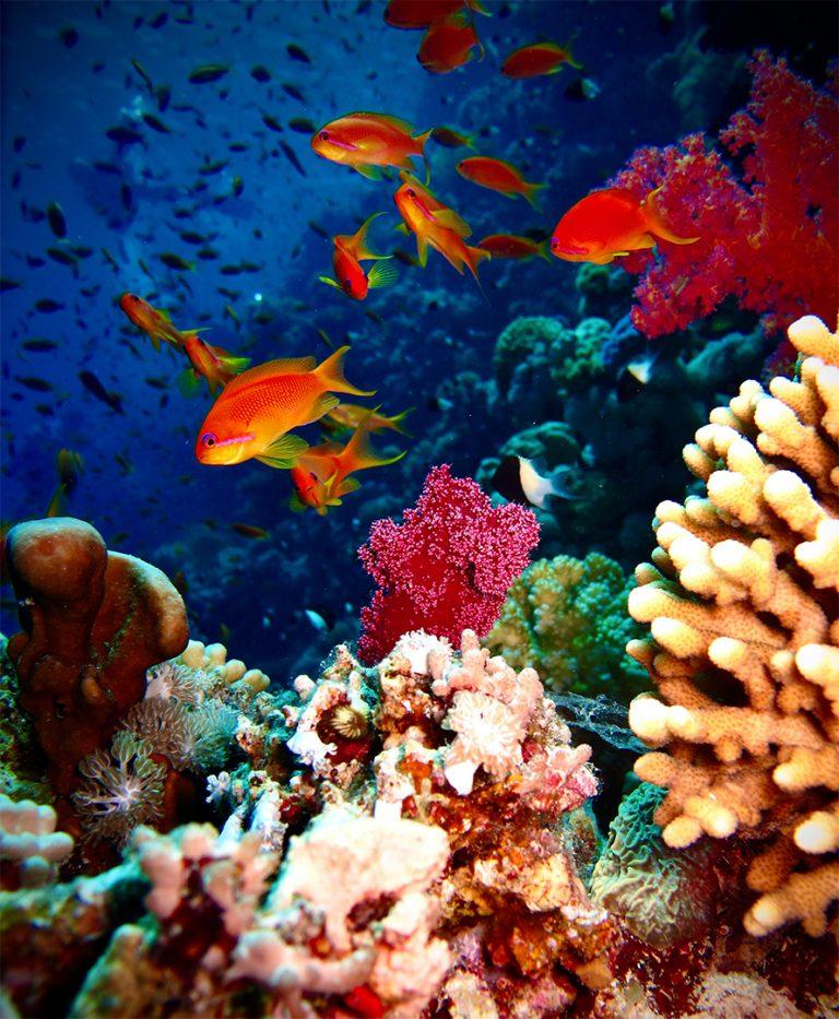 Fundo Coral